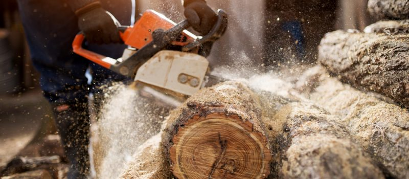 Dangers of Wood Dust: Close up of a lumberjack cutting old wood with a chainsaw.